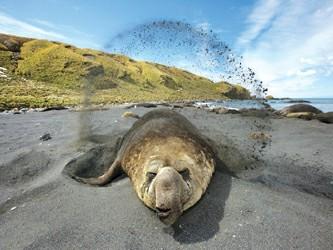 海豹携带海洋传感器完成神奇之旅