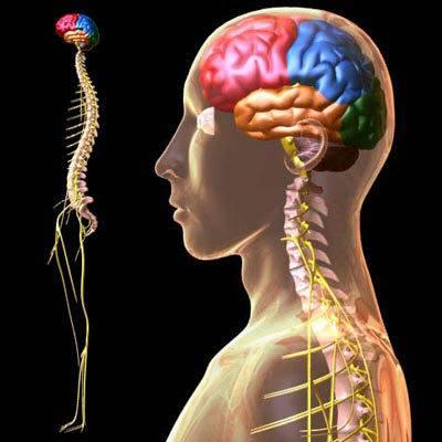 美国开展脑部芯片植入术 有望使瘫痪手臂复活