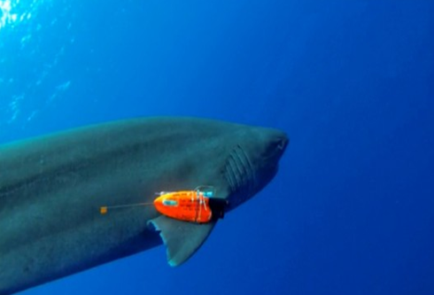 摄像机与传感器的组合,将更好保护鱼群与海洋健康