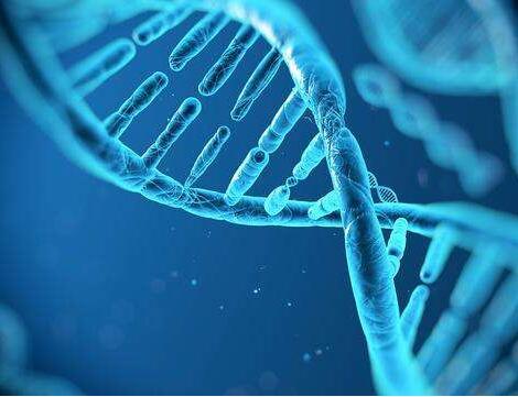 冰岛基因解码公司揭示人类种群的形成