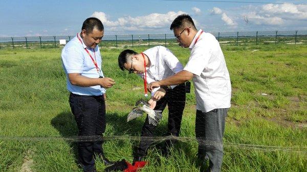 救助国家重点保护鸟类 松原查干湖机场在行动