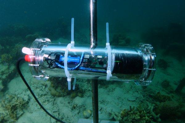 英特尔、埃森哲和Sulubaai环境基金会携手利用人工智能拯救珊瑚礁